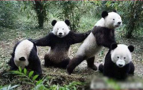 Khi gấu trúc không còn thâm quầng mắt - ảnh hài hot nhất Facebook, 10 ảnh hot Facebook